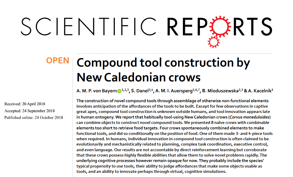 Screenshot_2018-10-28-Compound-tool-construction-by-New-Caledonian-crows---s41598-018-33458-z-pdf-1