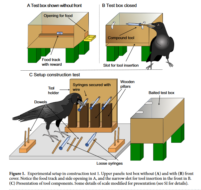 Screenshot_2018-10-28-Compound-tool-construction-by-New-Caledonian-crows---s41598-018-33458-z-pdf